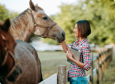 Horse care 1