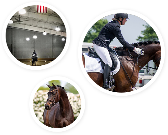 Horse training and riding